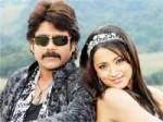 Trisha Pair With Nagarjuna Again