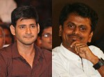 Murugadas Shoot Costly Car Chase Sequence With Mahesh Babu