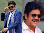 Cold War Between Balayya Nagarjuna Hasn T Ended Yet