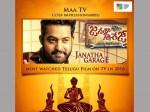 Janatha Garage Most Watched Telugu Movie On Tv
