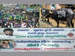 Mla Balakrishna Name On Buffalo