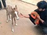 New Family Member Added With Ram Charan Upasana