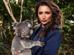 Parineeti Chopra Brutally Trolled Photo With Koala