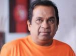 Brahmanandam Facilitated With Guru Shri Award