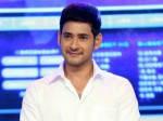 Mahesh Babu Tweet On Ktr Win
