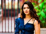 Yatra Fame Mahi V Raghav Will Going To Direct Tamannah For A Tamil Movie