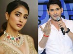 Mahesh Babu Given Smooth Stroke To Pooja Hegde In Maharshi Pre Release Event
