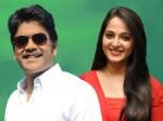 Anushka Shetty Will Romance With Nagarjuna Again
