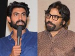 Rana Daggubati Shocking Comments On Kabir Singh