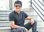 Gopichand Malineni Clarity About Nagarjuna Movie