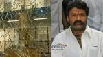 #YCPTerroristsAttack బాలకృష్ణ ఇంటిపై దాడి.. హిందూపూర్లో టెన్షన్.. టెన్షన్