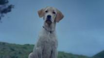 https://telugu.filmibeat.com/img/2021/06/dog-1622980767.jpg