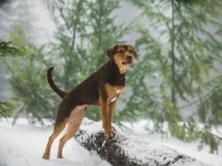 A Dog S Way Home Movie Dog Became Internet Sensation